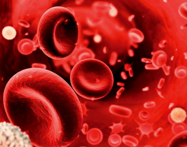 hemophilia genetic blood Hemophilia is a rare inherited bleeding disorder where the blood fails to clot normally due to a lack of blood clotting proteins (clotting factors) the condition.